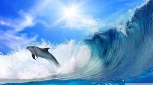fond_d-ecran_dauphin_surf_vague_ocean