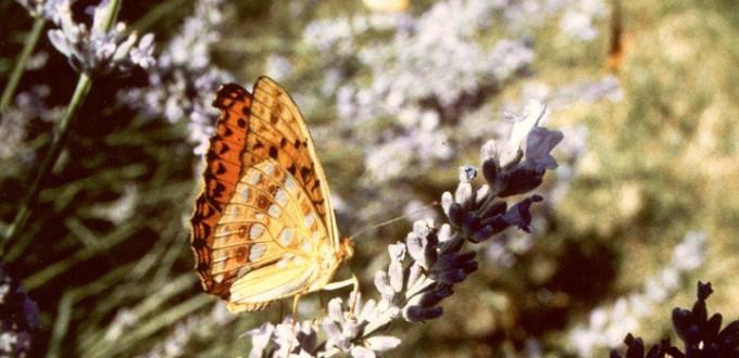 Papillon AG