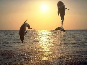 Dauphins hors de l eau - auteur inconnu